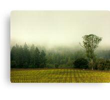 Redwoods vs. The Eucalyptus Canvas Print
