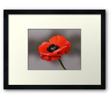 Poppy Framed Print