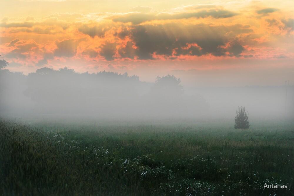 Foggy Grassland by Antanas