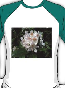 Delicate Rhododendron Blossoms T-Shirt