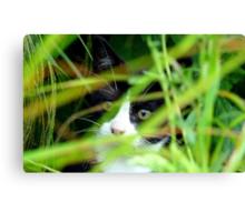 Peekaboo! Spike Kitten - Southland New Zealand Canvas Print