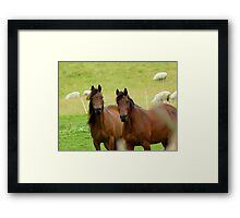 It Takes Two To Tango - Horses - NZ Framed Print