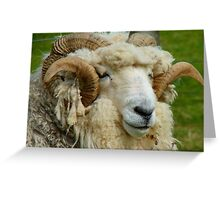 WHAT!!...Sorry Can't Hear With These Noise Cancelling Headphones...Drysdale Ram - NZ Greeting Card
