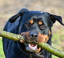 I love sticks me by czeddy70
