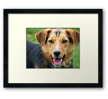 I'm Ready For Casting Master!! - Working Farm Dog - NZ Framed Print