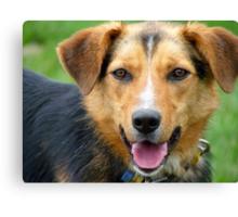 I'm Ready For Casting Master!! - Working Farm Dog - NZ Canvas Print