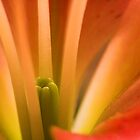 stamen by camohamo