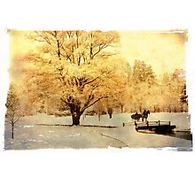 Two-Horse Open Sleigh  Photographic Print