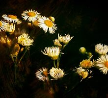 Daisy's in the dark  by CherylCooper