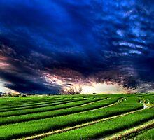 Fields Of Grain by bamagirl38