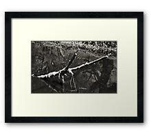 el sabinal 11 Framed Print