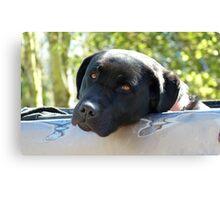 Black Beauty's Got Nothing On Me Mate!!...Black Labrador - NZ Dog Canvas Print