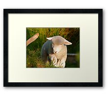 I'm The King Of The Castle.... Lamb - NZ Framed Print