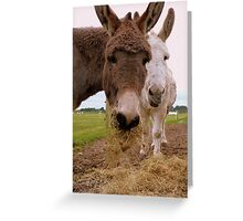 Hay... You Wanna Try Some!!! - Donkeys - NZ Greeting Card