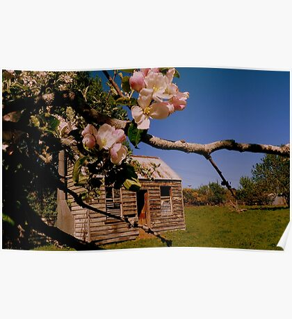 The lonely Apple Tree! - Old House - NZ - Southalnd Poster