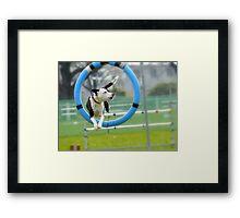 Hey...I Can Fly Through Hoops!!! - Flygility - NZ Framed Print