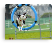 Hey...I Can Fly Through Hoops!!! - Flygility - NZ Canvas Print