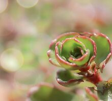 succulent by CherylCooper