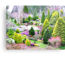 A Glympse Of Fairy Land ... Conifers Maple Glen - NZ Metal Print