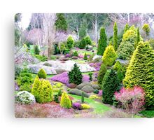 A Glympse Of Fairy Land ... Conifers Maple Glen - NZ Canvas Print