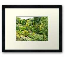Conifer Corner - Maple Glen - Southland - NZ Framed Print