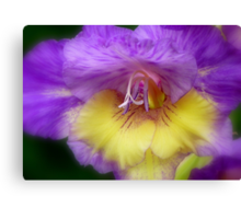 Splendid Beauty! - Gladiolus Flower - Gore NZ Canvas Print