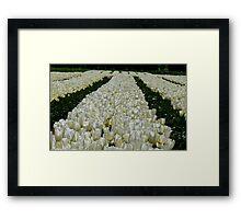 White Velvet Rows! - Tulip Plantation - NZ Framed Print