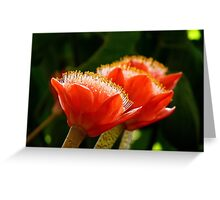 Nature's Bright Shaving Brushes - Paintbrush Lily - NZ Greeting Card