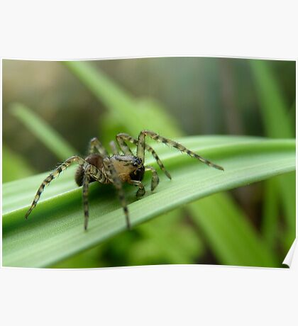 Where To Next! - Spider on Celery Stalk - NZ Poster