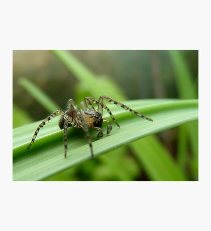 Where To Next! - Spider on Celery Stalk - NZ Photographic Print