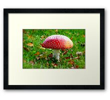 Magical Hallucinations - Amanita Muscaria - Fungi - NZ Framed Print