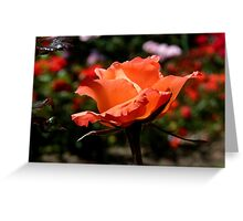A Single Rose Just For You! - NZ - Southland Greeting Card