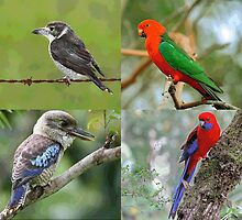 Native Birds Of Australia by Dunstan