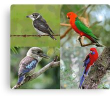 Native Birds Of Australia Canvas Print