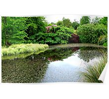Natures Amazing Mirror! - Garden - Southland Poster