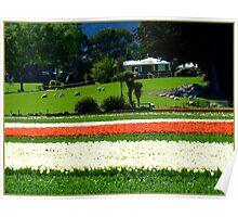 Imagine Waking Up To This! - Tulip Plantation - NZ Poster