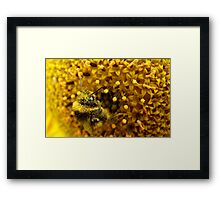 Bombus In A Sea Of Pollen! - Bumblebee On Sunflower - NZn Framed Print