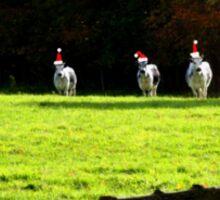Christmas Cows Sticker