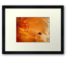 The Lady And The Rose - Rose - NZ Framed Print