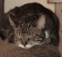 Sleeping kitten by Nicki Kenyon
