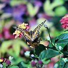 Fluttering Wings by Pat Moore