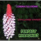 Perfect Harmonies - Challenge Winner Banner by kathrynsgallery