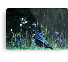 Turkeys on the run... Metal Print