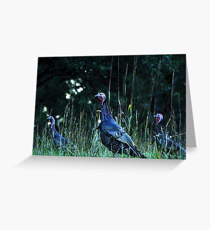 Turkeys on the run... Greeting Card