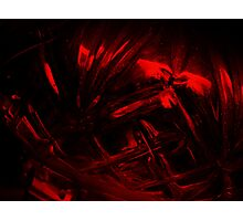 Crimson Crown Photographic Print