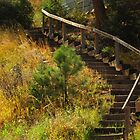 """Wooden Stairs""....Cascade, CO by dfrahm"