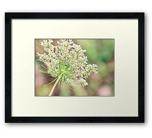Queens Lace Framed Print