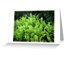 Multitude of Ferns in Mirrored Frame Greeting Card