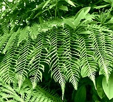Beautiful Ferns - Heligan by BlueMoonRose