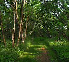 Less Used Path by marts1